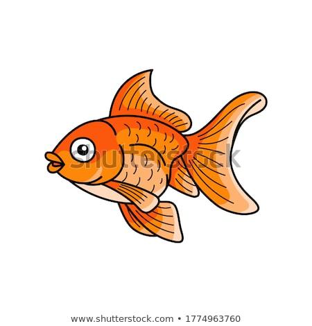 Cartoon goldfish Stock photo © bennerdesign