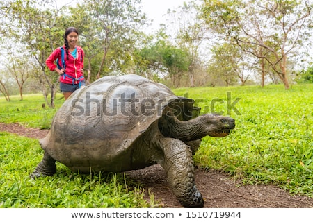 wildlife photographer and tourist on galapagos islands by giant tortoise stock photo © maridav