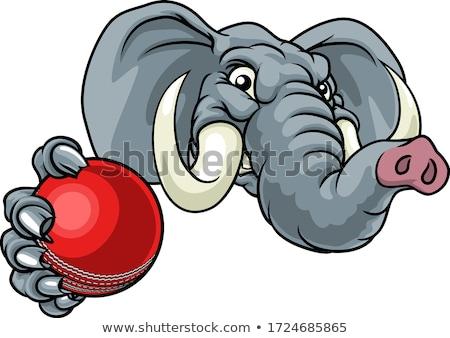 Elephant Cricket Ball Sports Animal Mascot Stock photo © Krisdog
