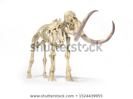 Esqueleto realista ilustração 3d ver branco Foto stock © Pixelchaos