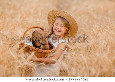 little girl on the farm stock photo © goce