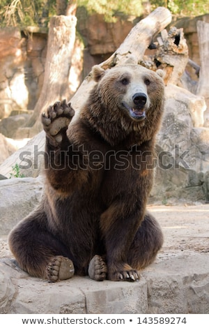 Cute bear waving Stock photo © adrian_n