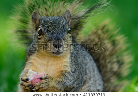 Bright-eyed and bushy-tailed! Stock photo © photography33