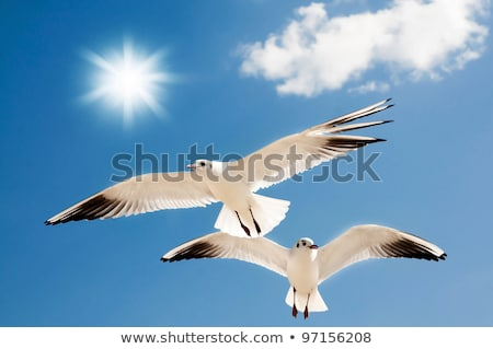 two seagulls hover in sky stock photo © bsani