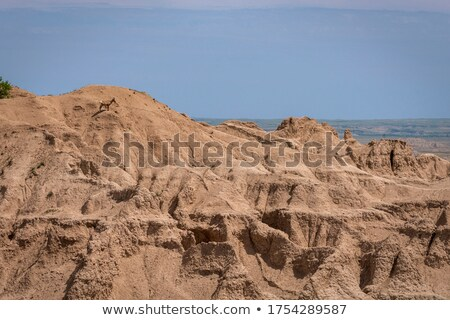 sheep standing on a rocky hill formation Stock photo © morrbyte