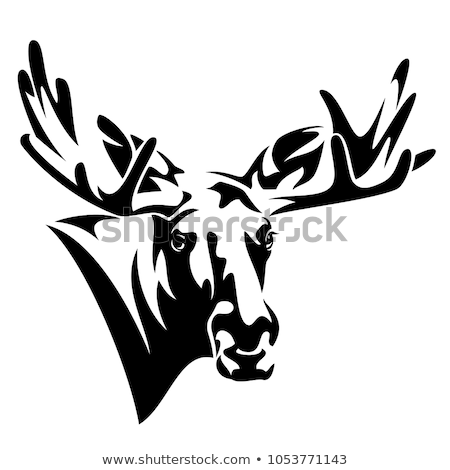 Moose Head Front Stock photo © Lightsource