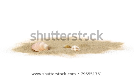 sea shell with sand on white background stock photo © redpixel