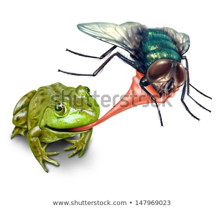 Frog Catching Bug Stock photo © Lightsource
