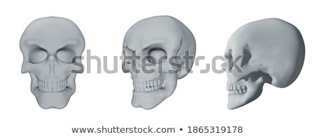 3d image of human skull in full face and profile  Stock photo © dacasdo