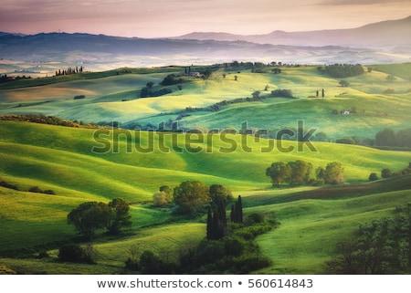 Idilli tájkép szójaszósz mező kék égbolt Stock fotó © chesterf