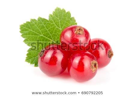 Piros ribiszke levelek fehér gyümölcsök izolált Stock fotó © MKucova