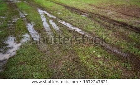 tire path in field stock photo © meinzahn