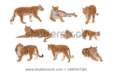 bengal tiger isolated collection stock photo © anan