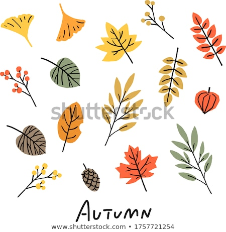 fallen leaves from trees in autumn Stock photo © tarczas