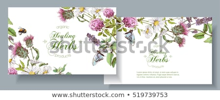 Decorative flower background with clover and place for text Stock photo © elenapro