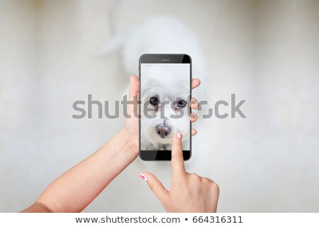 kid girl taking photos to puppy dog with camera stock photo © lunamarina