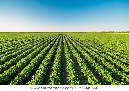 Farm mező fák természet űr egyedül Stock fotó © ajn