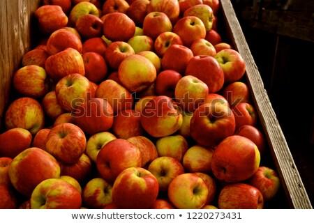 Verger de pommiers fruits frais Washington pommes verger attente Photo stock © cboswell
