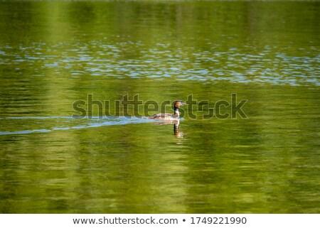 Muhteşem su mavi göl hayvanlar Stok fotoğraf © mariephoto
