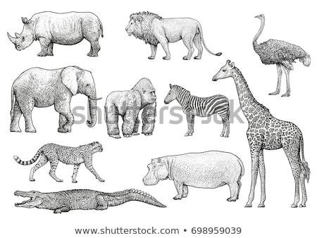 Elefántcsont elefánt agyar klasszikus vésés gravírozott Stock fotó © Morphart