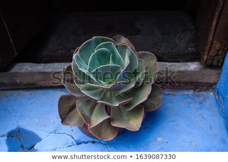 Abstract of Green Succulent Plant in Window Stock photo © feverpitch