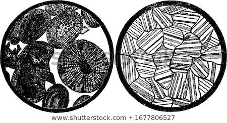 Damar bağbozumu oyulmuş örnek kuvars Stok fotoğraf © Morphart