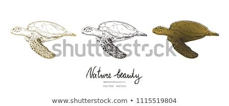 Underwater card with sea turtle, vector illustration Stock photo © carodi