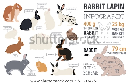 Animals pets vector flat silhouette icons set stock photo © vectorikart