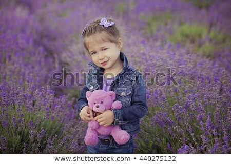 a lavender teddy bear stock photo © bluering