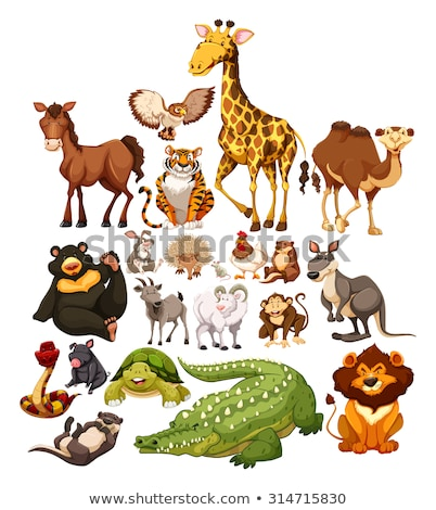 Set of different types of wild animals Stock photo © bluering