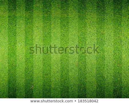 Futball fű absztrakt illusztráció nap sport Stock fotó © DzoniBeCool