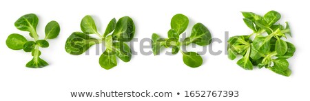 Fresche mais insalata foglie lattuga bianco Foto d'archivio © Digifoodstock