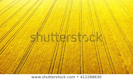 Stock photo: Way in rape field