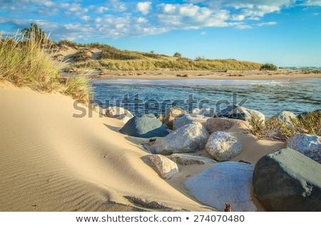 砂 · 砂漠 · リップル · スカラベ · 足跡 · 夏 - ストックフォト © janpietruszka