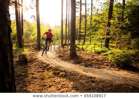 Mountainbiken parcours najaar bos berg Stockfoto © blasbike
