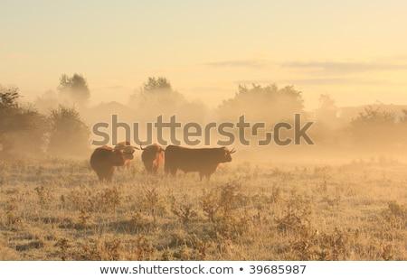 groningen in the fog stock photo © hofmeester
