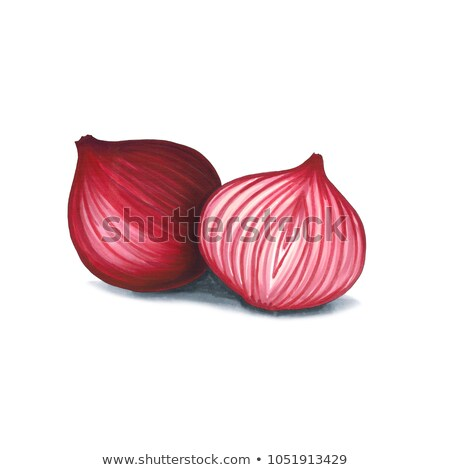 Red onion on a white background. Sketch done in alcohol markets Stock photo © user_10003441
