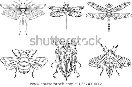 libélula · corpo · asas · grande · flores - foto stock © simply