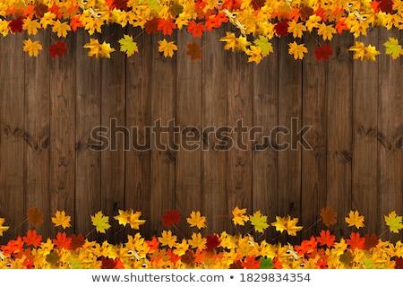 Autunno rovere foglie abstract stagione vettore Foto d'archivio © kostins