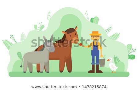 Donkey Horse Farmer with Hat Vector Illustration Stock photo © robuart