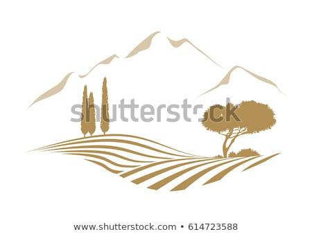 Logotipo ícone agrícola campo montanha Foto stock © ussr