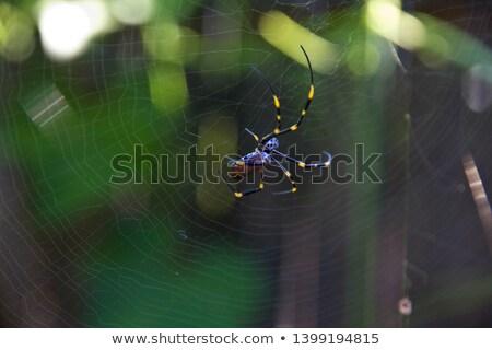 illusztráció · olvadt · jég · nyár · ital · koktél - stock fotó © Blue_daemon