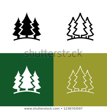 Silvicultura ícone símbolo pinheiro design gráfico floresta Foto stock © mikemcd