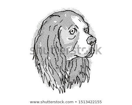 Cavalier King Charles Spaniel Dog Breed Cartoon Retro Drawing Stock photo © patrimonio