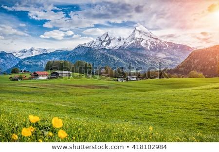 Alpino paisagem noite ver alpes Áustria Foto stock © MichaelVorobiev