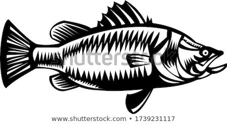 Tuzlu su yandan görünüş siyah beyaz retro tarzı örnek Asya Stok fotoğraf © patrimonio