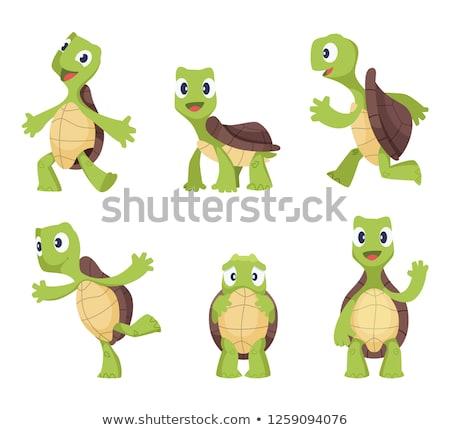 kaplumbağa · yalıtılmış · beyaz · vektör · mutlu - stok fotoğraf © rastudio