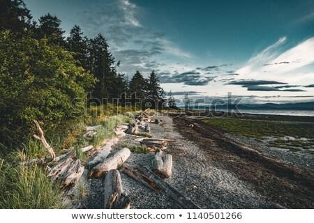 Driftwood sekcja wyblakły streszczenie środowisk Zdjęcia stock © jeayesy