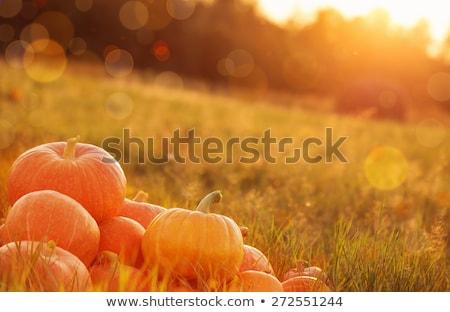 tökök · mező · ősz · jelenet - stock fotó © goce