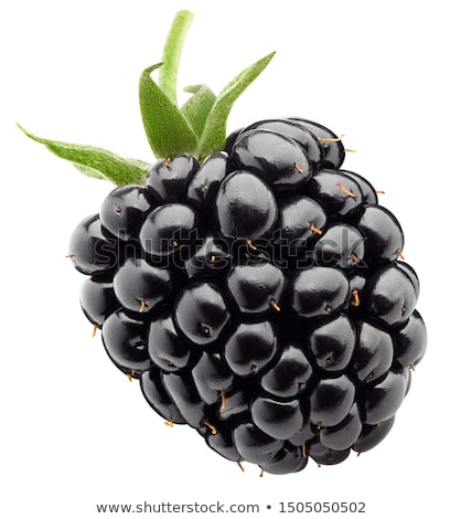 Dulce BlackBerry frutas blanco Foto stock © Masha